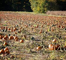 The Pumpkin Patch Nearby - Rhode Island - US by Jack McCabe