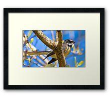 Grey Fantail Framed Print