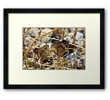Mating Buckeyes - Miami White Water Park Framed Print