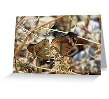 Mating Buckeyes - Miami White Water Park Greeting Card