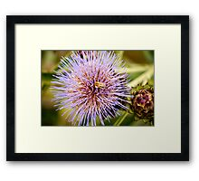 Bumbling About. Framed Print