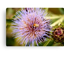 Bumbling About. Canvas Print