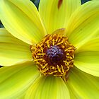 Yellow Dahlia by Betty Mackey