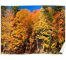 Amazing Autumn Arrival Poster