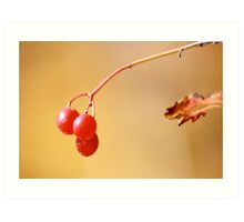 Red Berry Blur Art Print