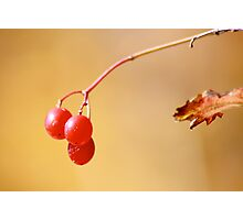 Red Berry Blur Photographic Print