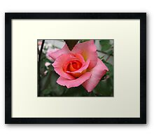 Hick Kicking Rose Framed Print
