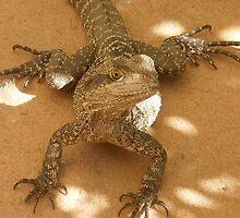 Wonderful Reptile by ~  Virginia ~