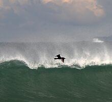 Bird And Wave by Noel Elliot