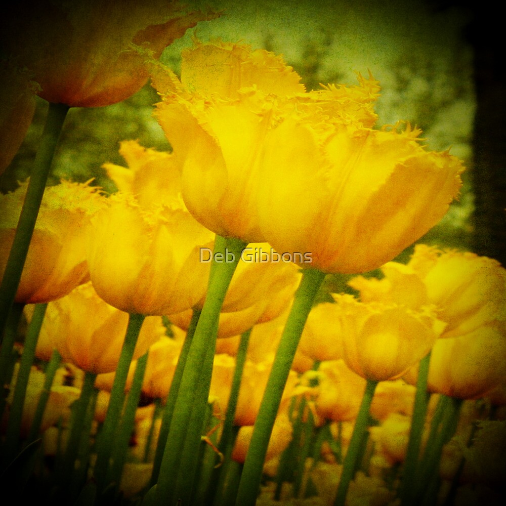 Yellow Tulips by Deb Gibbons