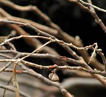 Gum branches by James Dunshea