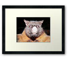 Tyrannosaurus Possum Framed Print