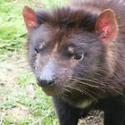Tassie Devil - and friends by gaylene