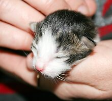 This is Squeak at 1 day old. by Whole Shot  Photography