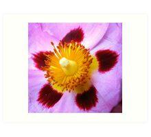 Tissue Flower Art Print