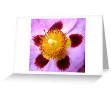 Tissue Flower Greeting Card