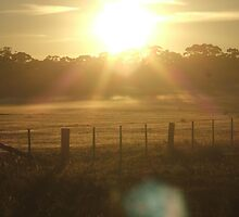 Early Morning Sun by Laura Wright