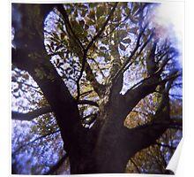 Tree climbing Poster