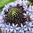 Purple Bee by KiaPhotography