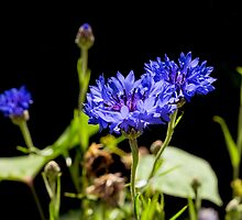 Black And Blue by JoeGeraci