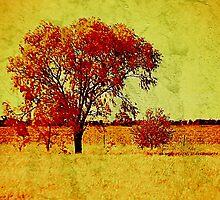 Golden Harmony  >> by JuliaWright