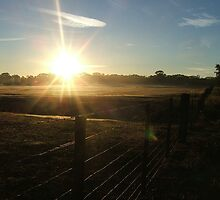 Sun Along A Farmers Fence by Laura Wright
