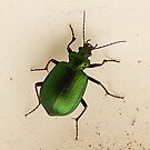 Beetle  Green by Rick Playle