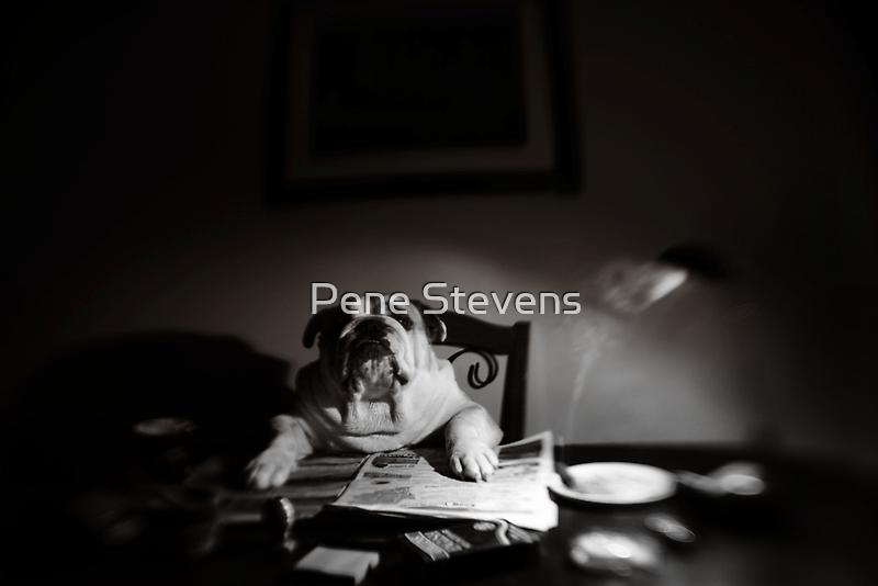 The Morning Paper by Pene Stevens