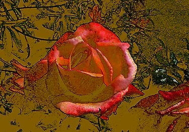 A Rose by any Name by Trevor Kersley