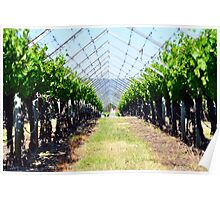 Swan Valley Vines Poster