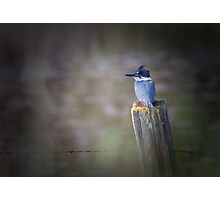 Belted Kingfisher Photographic Print