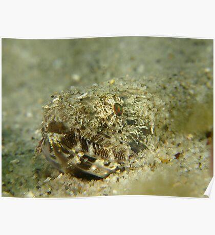 Swansea Lizardfish Poster