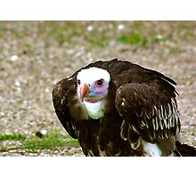 Ethel the Vulture Photographic Print