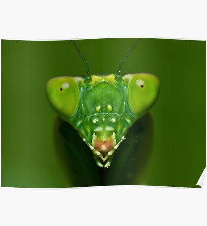 Mantis Poster