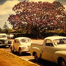 jacaranda by Soxy Fleming