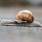 Snail on a Mission by Monica M. Winkler