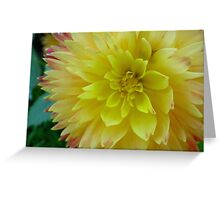 Double Yellow Dahlia Greeting Card