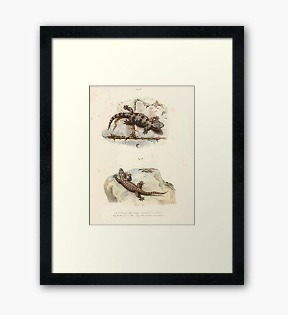 Leopold Joseph Fitzinger 1867 0051 Picture Atlas for popular scientific natural history of vertebrates Framed Print