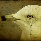 Portrait of a seagull by nefetiti