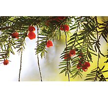 Nature's Christmas Photographic Print