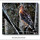 Red Shouldered Hawk by lynell