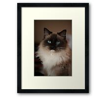 Sully Monster cat  Framed Print