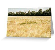 Wheat Field Greeting Card