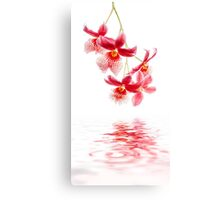 Orchid - 10 Canvas Print