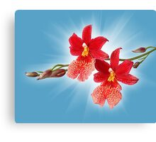 Orchid - 11 Canvas Print
