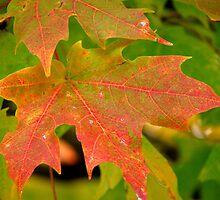 Textures Found In Autumn by Linda Miller Gesualdo