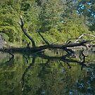 Snag on Ford's Creek by Valarie Napawanetz