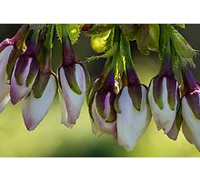Macro Blossom Flowers Photographic Print