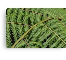 Macro Fern Leaves Canvas Print
