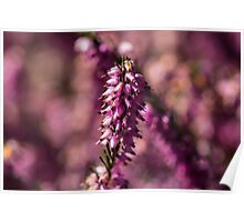 Macro Heather Plant Poster